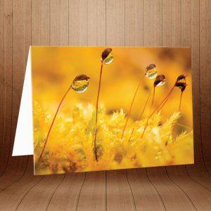 کارت پستال طبیعت کد 3770