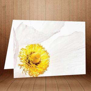 کارت پستال طبیعت کد 3773