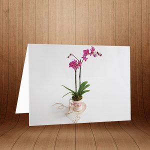 کارت پستال طبیعت کد 3774