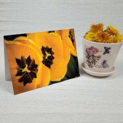 کارت پستال طبیعت کد 3797 کلاسیک