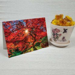 کارت پستال طبیعت کد 3498 کلاسیک