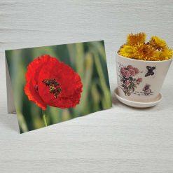 کارت پستال طبیعت کد 4702 کلاسیک