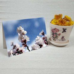 کارت پستال طبیعت کد 4699 کلاسیک