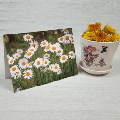 کارت پستال طبیعت کد 3371 کلاسیک