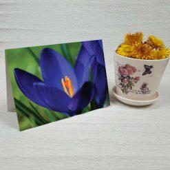 کارت پستال طبیعت کد 3372 کلاسیک