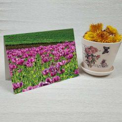 کارت پستال طبیعت کد 3384 کلاسیک
