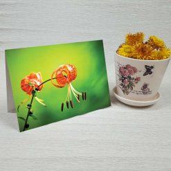کارت پستال طبیعت کد 3393 کلاسیک